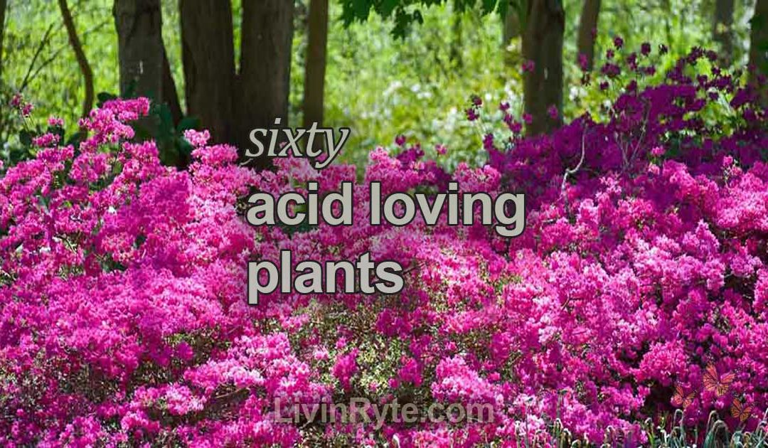 60 Acid Loving Plants