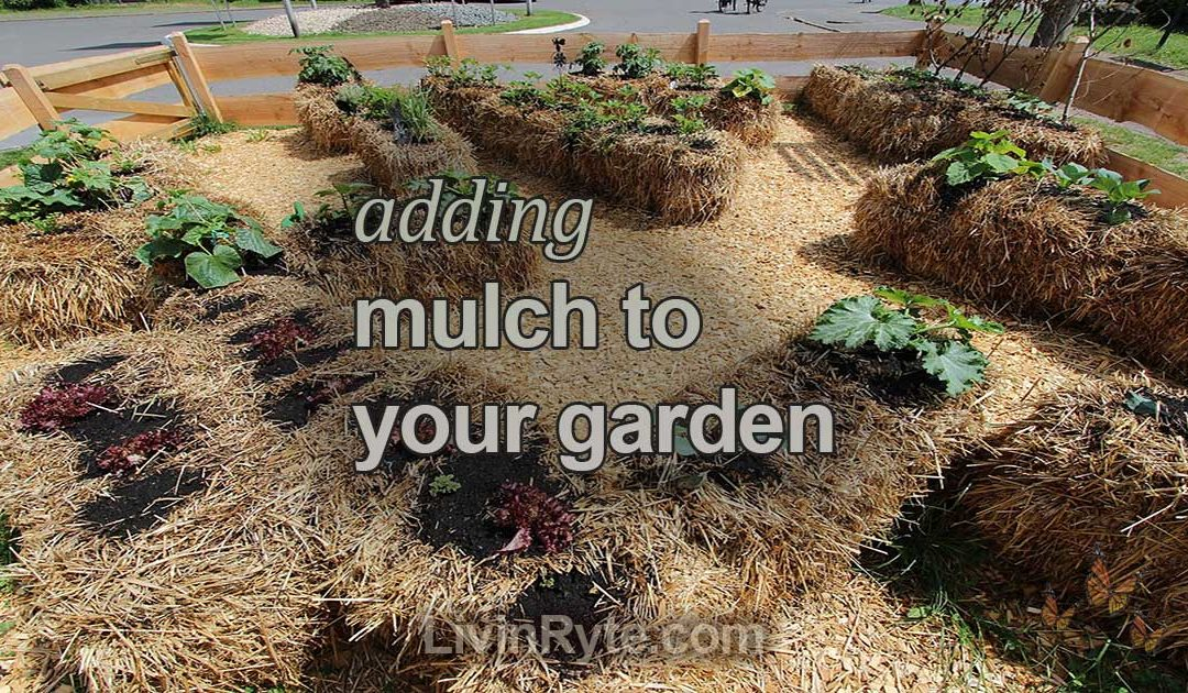 Adding Mulch to your Garden