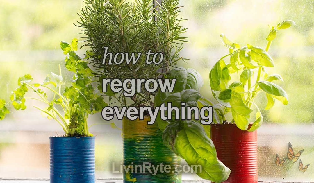 How To Regrow Everything