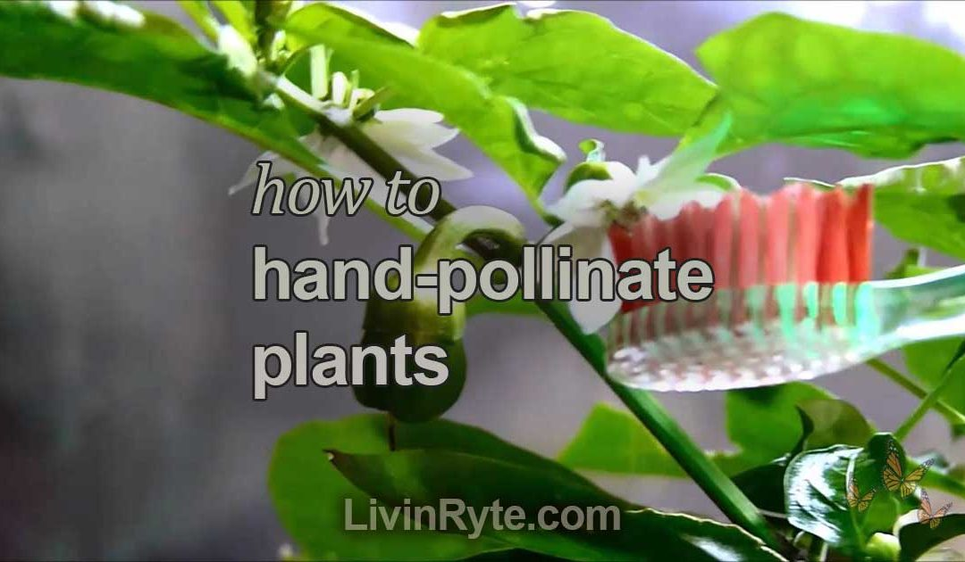 How To Hand-Pollinate Plants